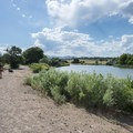 Off-leash dog area along the South Platte River at Chatfield State Park.- Chatfield State Park