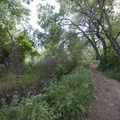 South Platte River Loop Trail.- South Platte River Loop Trail