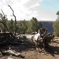 Fallen foliage along the Green Mountain Trail.- Green Mountain Trail + Exclamation Point