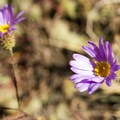 Wildflowers (help us identify it by providing feedback) along the Green Mountain Trail in Black Canyon.- Green Mountain Trail + Exclamation Point
