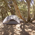 Sites are amply shaded at the North Rim Campground.- North Rim Campground, Colorado