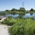 Muskrat Pond and Chatfield wetlands near the Discovery Pavilion and Audubon Center.- Discovery Pavilion + Audubon Center