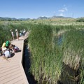 Chatfield wetlands near the Discovery Pavilion and Audubon Center.- Discovery Pavilion + Audubon Center