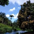 You'll find more than just palm trees in this tropical paradise.- McBryde Garden