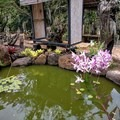 This small pond provides a pleasant seating area, and it is surrounded by aquatic plants, orchids, and other stunning flowers.- McBryde Garden