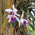 Some of nature's most spectacular flowers are in the orchid family.- McBryde Garden