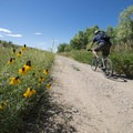 Mountain biker and prairie coneflower (Ratibida columnifera) along the Dixon Reservoir Loop Trail.- Dixon Reservoir Loop Trail