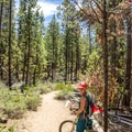 If you start at the gravel pullout, the first part of the trail is easy riding that parallels the creek.- Paulina Creek Waterfalls Mountain Biking