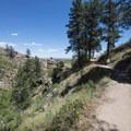 Arthur's Rock Trail through groves of ponderosa pine (Pinus ponderosa).- Arthur's Rock Hike