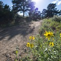 Unidentified aster species along the Towers Trail.- Stout, Sawmill + Nomad Trail Loop