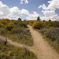 The access trail at Island Peaks Overlook.- North Rim Road
