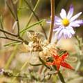 Unidentified species (help us identify it by providing feedback).- North Rim Road