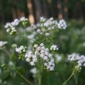 Wildflowers along the trail.- Radnor Lake
