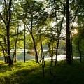 Radnor Lake- Radnor Lake