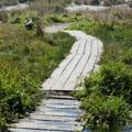 A short stroll leads over a boardwalk through a small lagoon.- Clam Beach