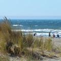 Grassy dunes border this beach.- Clam Beach
