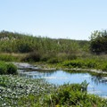 A small lagoon sits between the parking area and the beach.- Clam Beach