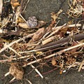 Accumulated driftwood, feathers, and grasses along the beach.- Lagoon Creek Beach