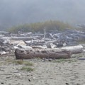 Large piles of driftwood behind the beach.- Crescent Beach
