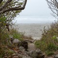 A narrow path opens to the beach.- Crescent Beach