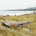 Large piles of driftwood sit along the grasses.- Pelican State Beach