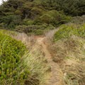Trail leading back to the parking area.- Pelican State Beach