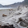 Lines add detail to the driftwood.- Dry Lagoon Beach
