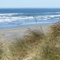 Grasses from nearby dunes.- Mad River County Beach