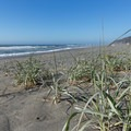 Some small patches of grass grow in the sand.- Redwood Creek Beach + Picnic Area