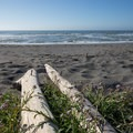 Wildflowers growing among the driftwood.- Redwood Creek Beach + Picnic Area