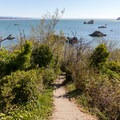 The trail opens up a little with views of the ocean.- Old Home Beach