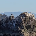 Seagulls rest on a frequently visited rock.- Old Home Beach