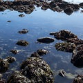 Tide pools here are loaded with interesting organisms.- McVay Rock Beach