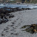 Footprints in the pebbles leading to the northern shores.- McVay Rock Beach