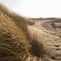 An abundance of grass grows on the dunes.- Pistol River South Beach