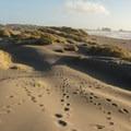 Numerous paths crisscross over the dunes.- Pistol River South Beach