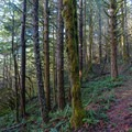 Lush forest to hike through.- Augspurger Mountain