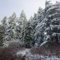 Crossing the snowline.- Augspurger Mountain