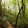 Middle Prong Wilderness.- Black Balsam Knob via the Fork Mountain Loop