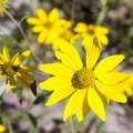 Wildflowers along the trail to Bridal Veil Falls.- Bridal Veil Falls, Telluride