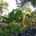 Oases of flowers and gardens are scattered throughout the park.- Prospect Park