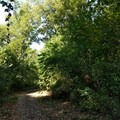 A surprising pocket of forest is deep within Prospect Park.- Prospect Park