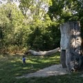 The Donald and Barbara Zucker Natural Play area uses logs and stumps to capture children's imagination.- Prospect Park