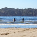 Headed out for a surf at Chesterman Beach.- Chesterman Beach