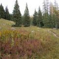 The Needle Creek Trail to the Chicago Basin travels through meadow and pine forest.- Chicago Basin