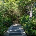 Boardwalk trail down to the beach.- Cox Bay