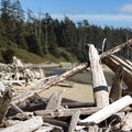 No shortage of driftwood here.- Combers Beach