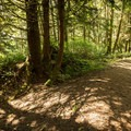 On the trail down to Combers Beach.- Combers Beach