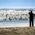 Birdwatching at Combers Beach.- Combers Beach