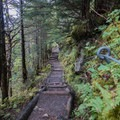 On the way up the Trillium Gap Trail.- Mount LeConte via Trillium Gap + Boulevard Trail
